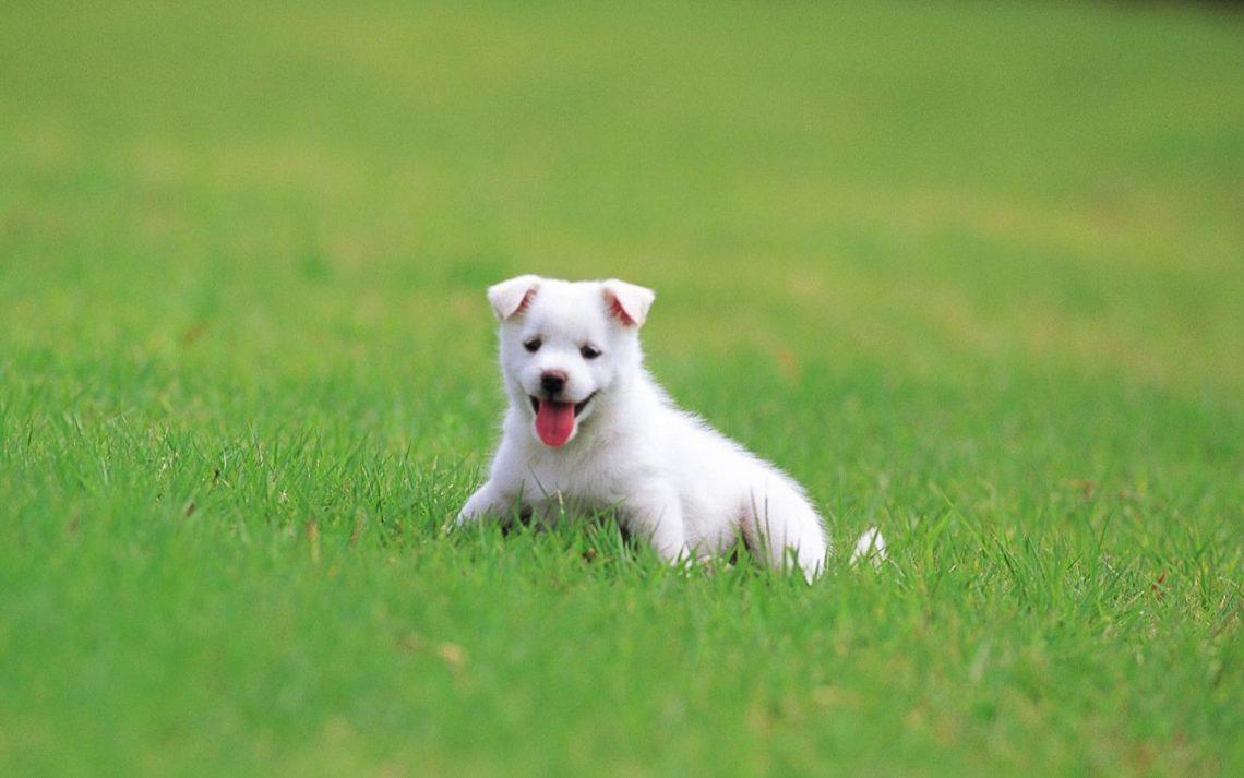 Белый щенок к чему снится