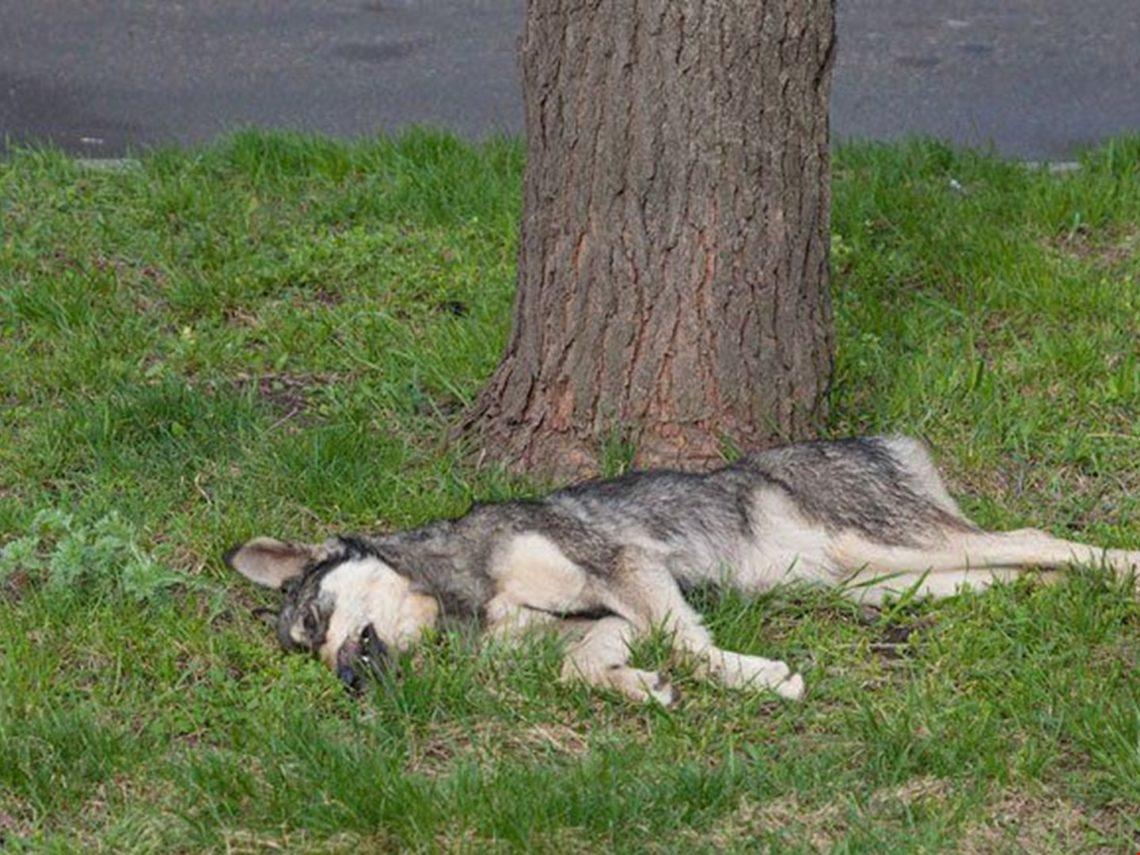 К чему снится убийство собаки