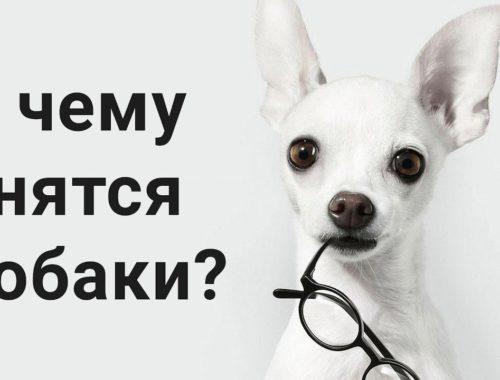 К чему снятся собаки значение
