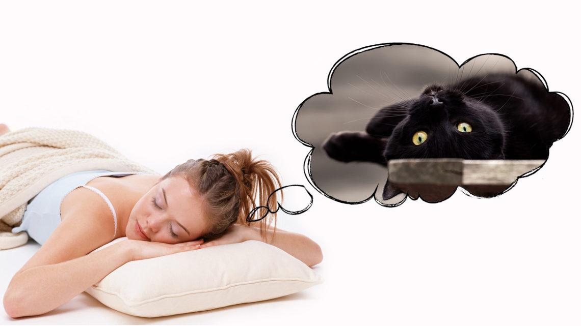 К чему снится большой кот во сне